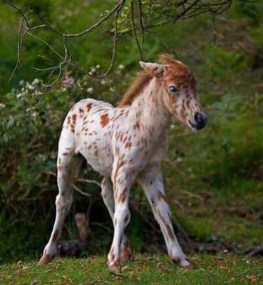 28 Cute Baby Horses